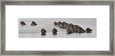 Framed Print featuring the photograph Frozen Flock by Kevin Munro