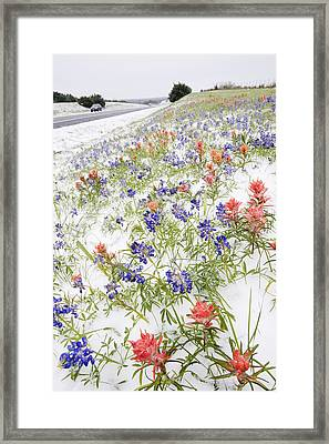 Frozen Flowers In Snow By Country Road, Texas Hill Country, Texas, Usa Framed Print