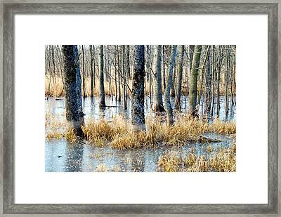 Frozen Forest Framed Print by Crissy Sherman