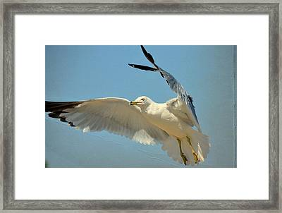 Frozen In Time Framed Print by Fraida Gutovich