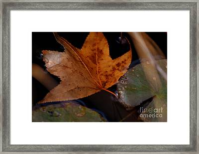 Frozen In Time Framed Print by Tamera James