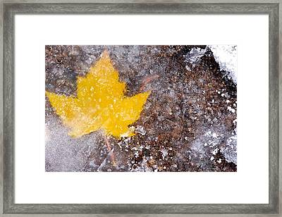 Framed Print featuring the photograph Frozen Leaf by Scott Holmes