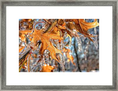 Frozen Leaves Framed Print
