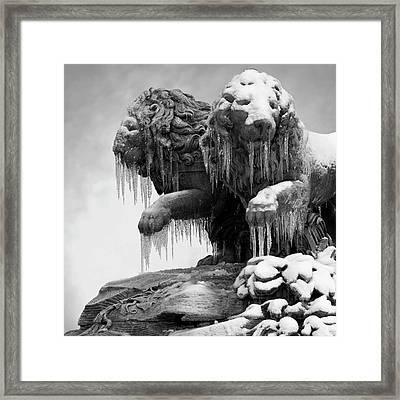 Frozen Lions Framed Print