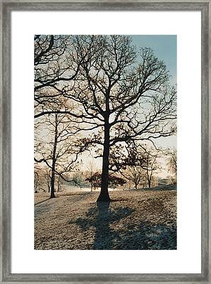 Framed Print featuring the photograph Frozen Oak Silhouette by Peg Toliver
