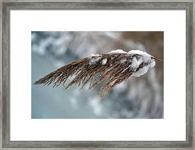 Frozen Pampas. Framed Print