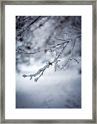 Frozen Path Framed Print by Mike Reid