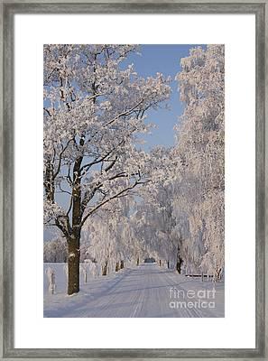 Frozen Path Through Trees Framed Print
