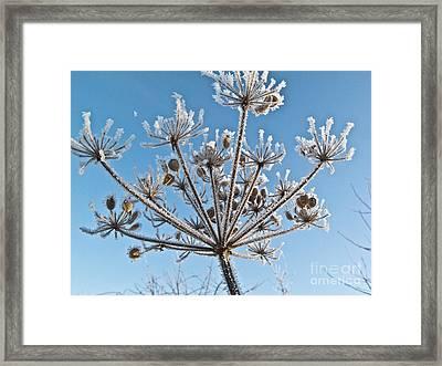 Frozen Plant Framed Print