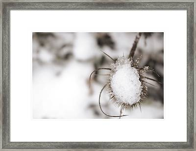 Framed Print featuring the photograph Frozen Plant by Lenny Carter