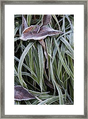Framed Print featuring the photograph Frozen by Raffaella Lunelli