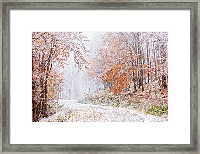 Frozen Road In Frosted Forest Framed Print by Evgeni Dinev