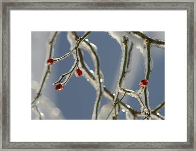 Framed Print featuring the photograph Frozen Rose Hips by Peg Toliver