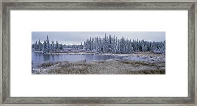Frozen Swampland, Near 100 Mile House Framed Print by David Nunuk