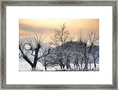 Frozen Trees Framed Print by Mats Silvan