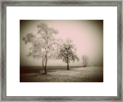 Frozen Trees Framed Print by Prashant Ambastha