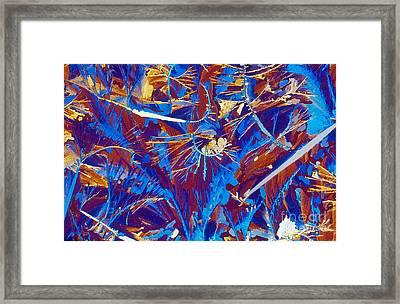 Fructose Framed Print by Michael W. Davidson