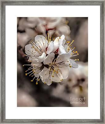 Fruit Bouquet Framed Print