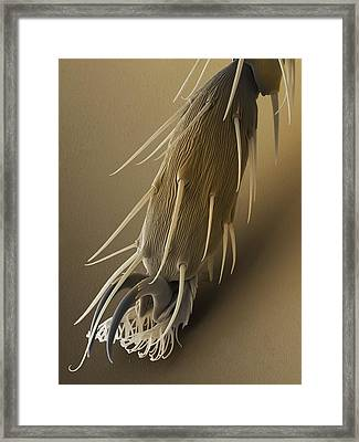 Fruit Fly Foot, Sem Framed Print by Power And Syred