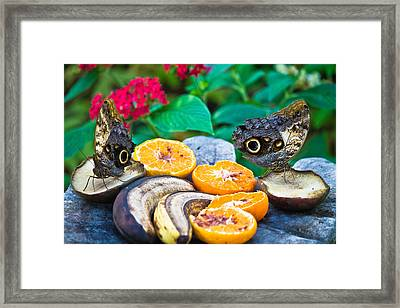 Fruit Of Life Framed Print