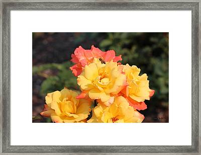 Fruits Of Life Framed Print