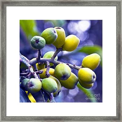 Sicilian Fruits Framed Print