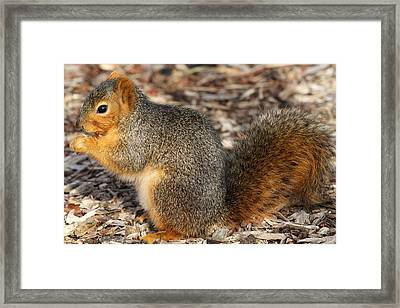 Framed Print featuring the photograph Fruity Squirel by Elizabeth Winter