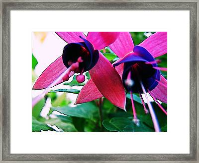 Fuchsia Abstraction Framed Print