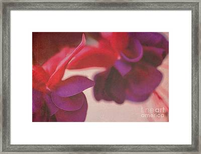 Fuchsia Framed Print by Angela Bruno