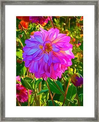 Fuchsia Delight Framed Print by Ken Stanback