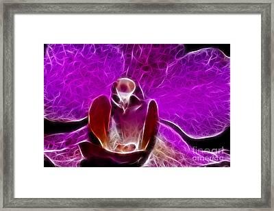 Fuchsia Sweetness Framed Print by Mariola Bitner