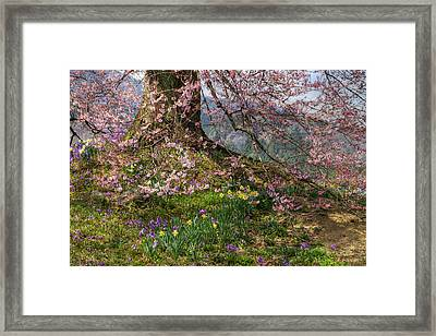 Framed Print featuring the photograph Full Bloom by Tad Kanazaki