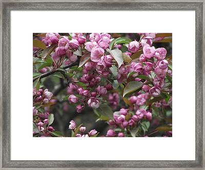 Full Blossom Framed Print by Erika Betts