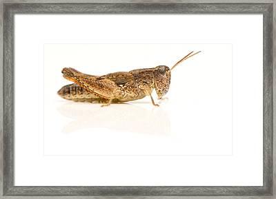 Full Body Studio Image Of An Australian Framed Print by Brooke Whatnall