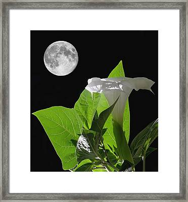Full Moon Flower Framed Print by Angie Vogel