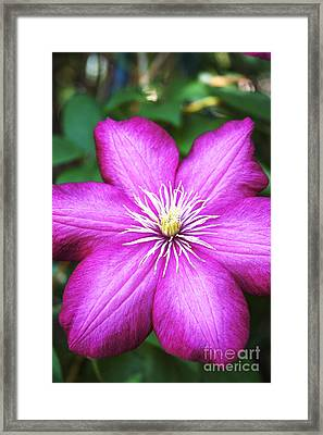Full On  Framed Print by Bob and Nancy Kendrick