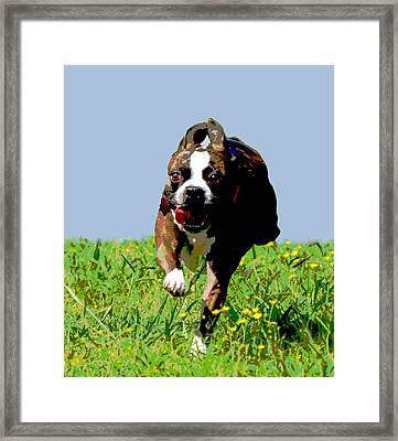 Full Speed Ahead Framed Print by Dorrie Pelzer