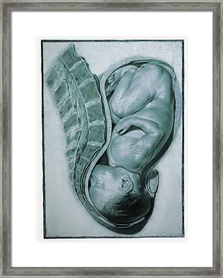 Full-term Foetus At 40 Weeks Framed Print by Mehau Kulyk
