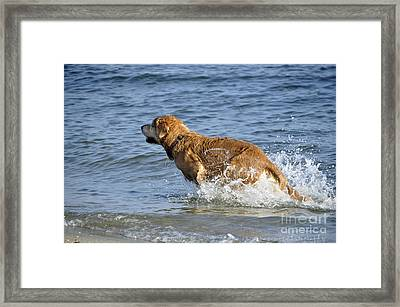 Fun Day At The Beach Framed Print by Tamera James