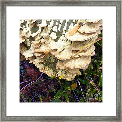 Framed Print featuring the photograph Funghi I by David Klaboe