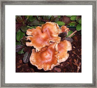 Fungus Among Us Framed Print by Mary Ann Southern
