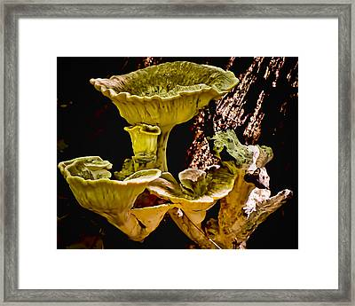 Fungus Among Us Framed Print by Michael Putnam