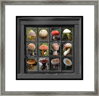 Fungus By Windowlight Framed Print
