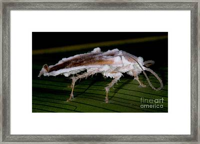Fungus-killed Insect Framed Print by Dant� Fenolio