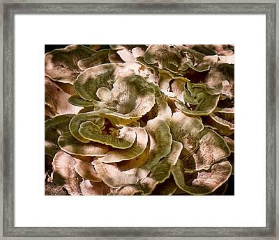 Fungus Swirl Framed Print by Michael Putnam