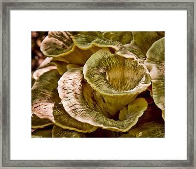 Fungus Tunnel Framed Print by Michael Putnam