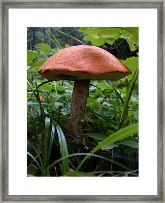 Fungus Unamed Framed Print