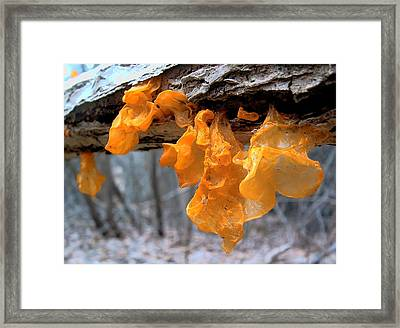 Fungus Witches Butter Framed Print