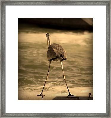 Funny Flamingo Framed Print by Radoslav Nedelchev