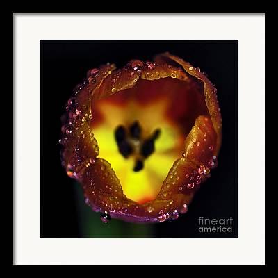 Yellow Glowing Stamen Framed Prints